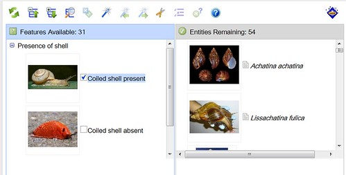 Screen shot of a Lucid key for identifying land snails and slugs.