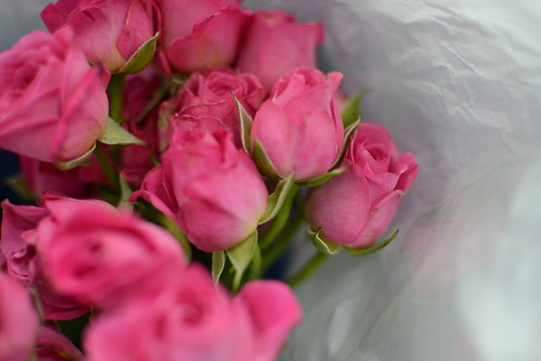Roses from Ruben ^_^
