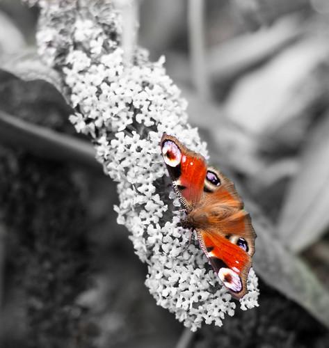 A few Butterflies