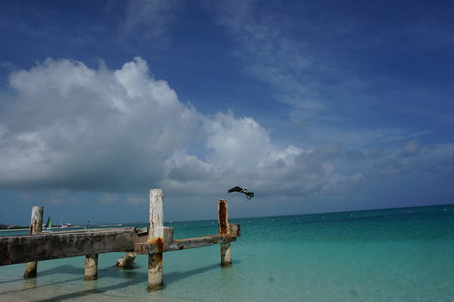 vacation bird beach water