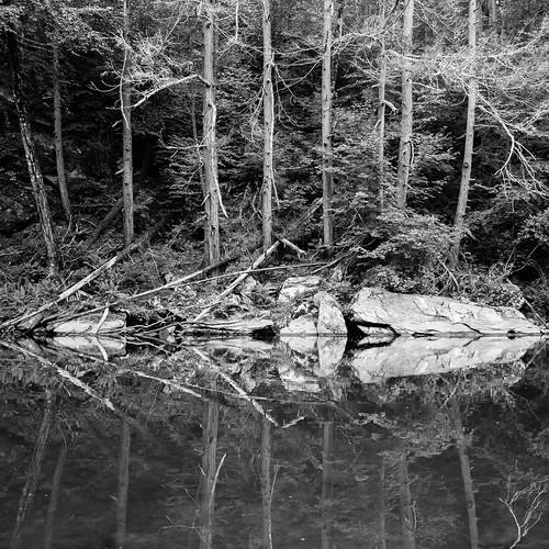 Trees reflected on the Shepaug River