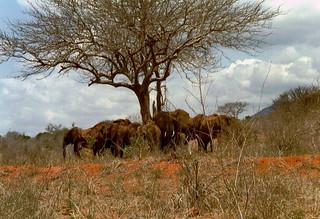Kenia 2000 - 100