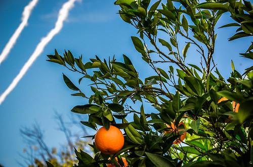 Naranjas 6