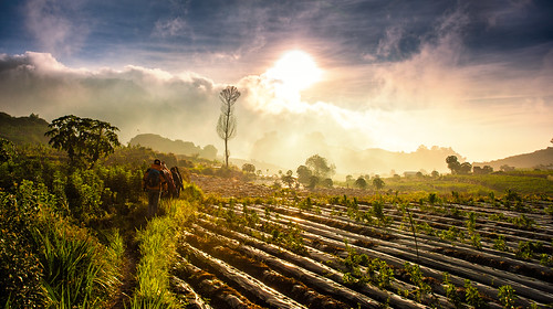 tourism nature sunrise trekking indonesia landscape nikon scenery farm scenic wideangle nikkor 28105mm centraljava dieng wonosobo d700