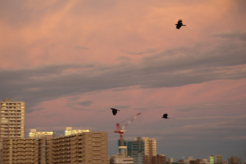 Crow go home -After Typhoon at Saitama
