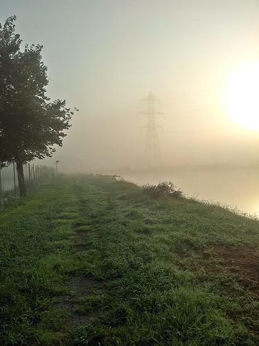 tree fog rasht رشت