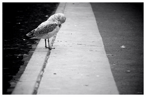 Olympic Plaza seagull by Wanderfull1