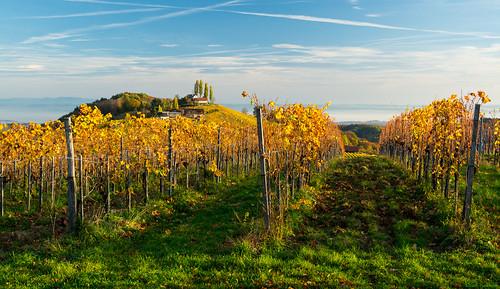 autumn fog österreich nikon nebel herbst vineyards nikkor vr afs steiermark weinberge südsteiermark 1685 d7100 southstyria ratschanderweinstrase