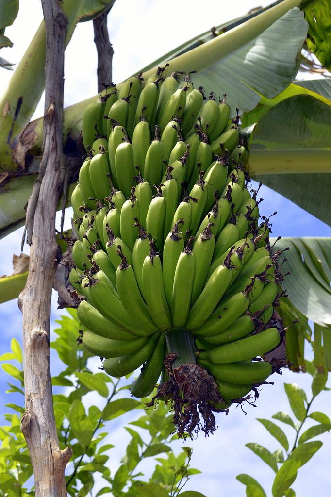 Bananas, Rwanda