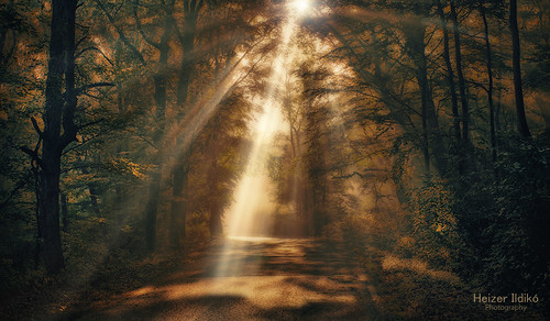 autumn trees light mist nature leaves fog forest woodland rays