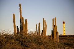 Cacti Sunset Aruba