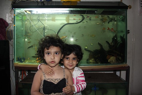 Zinnia Fatima And Nerjis And Marziyas Fish Tanks by firoze shakir photographerno1