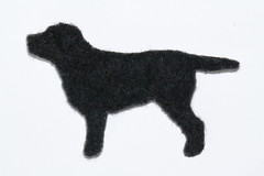 Labradorinnoutaja (2)