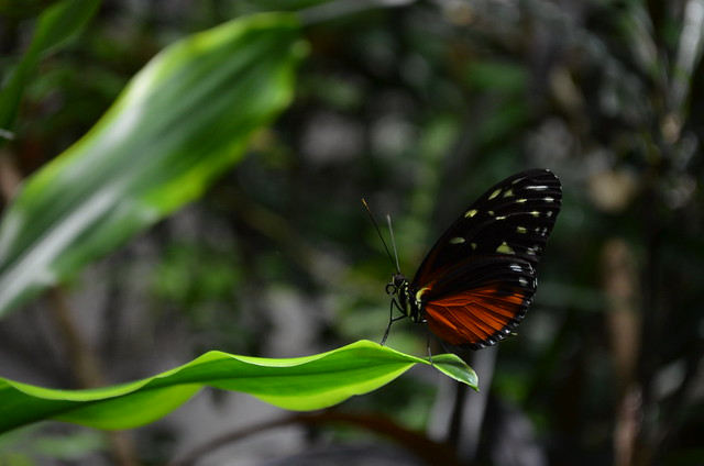 Biosphaere Potsdam butterfly closeup