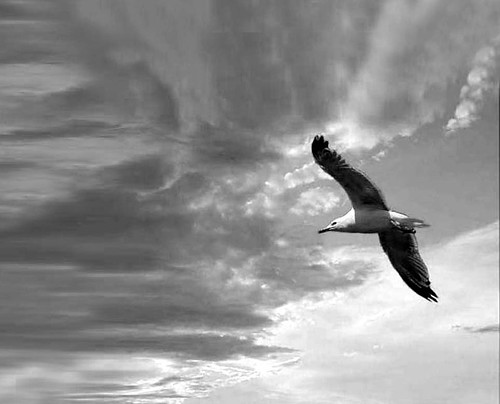 seagull and clouds ...