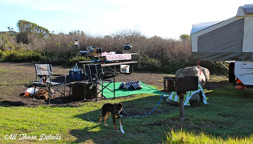 Campsite Dog Run