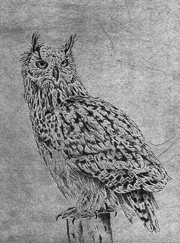 greyowlsmall