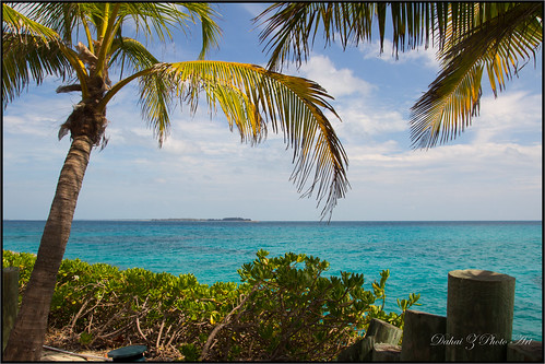 palmtrees caribbean royalcaribbean nassaubahamas bluelagoonisland tropicalwaters springbreak2014 cruise2014