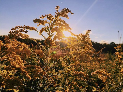 folk wanderlust beautiful createtoexplore outdoors createexplore explore view roamtheplanet garden sky colorful sunset sunshine flowers vscocam vsco