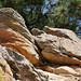 Coyote Ridge_MIN 363_31