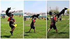 #dogs can #fly #doggie #ontario #iephotographer #canon #eventphotographer #sportevent