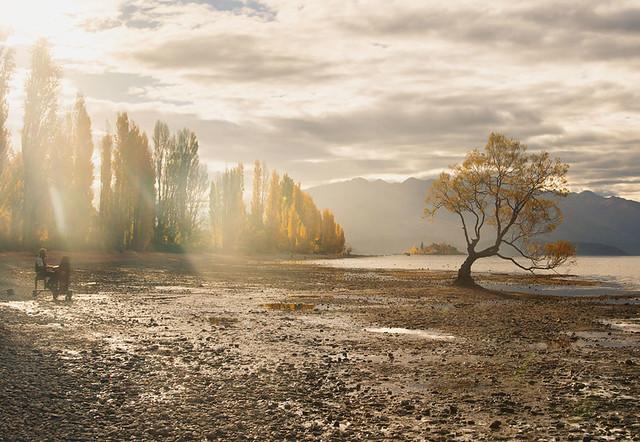 A travelling piano man and a Wanaka Tree, Lake Wanaka
