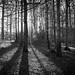 When light creates shadow by Rafel Cabot-Mesquida