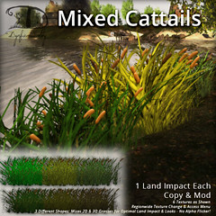 Mixed Cattails