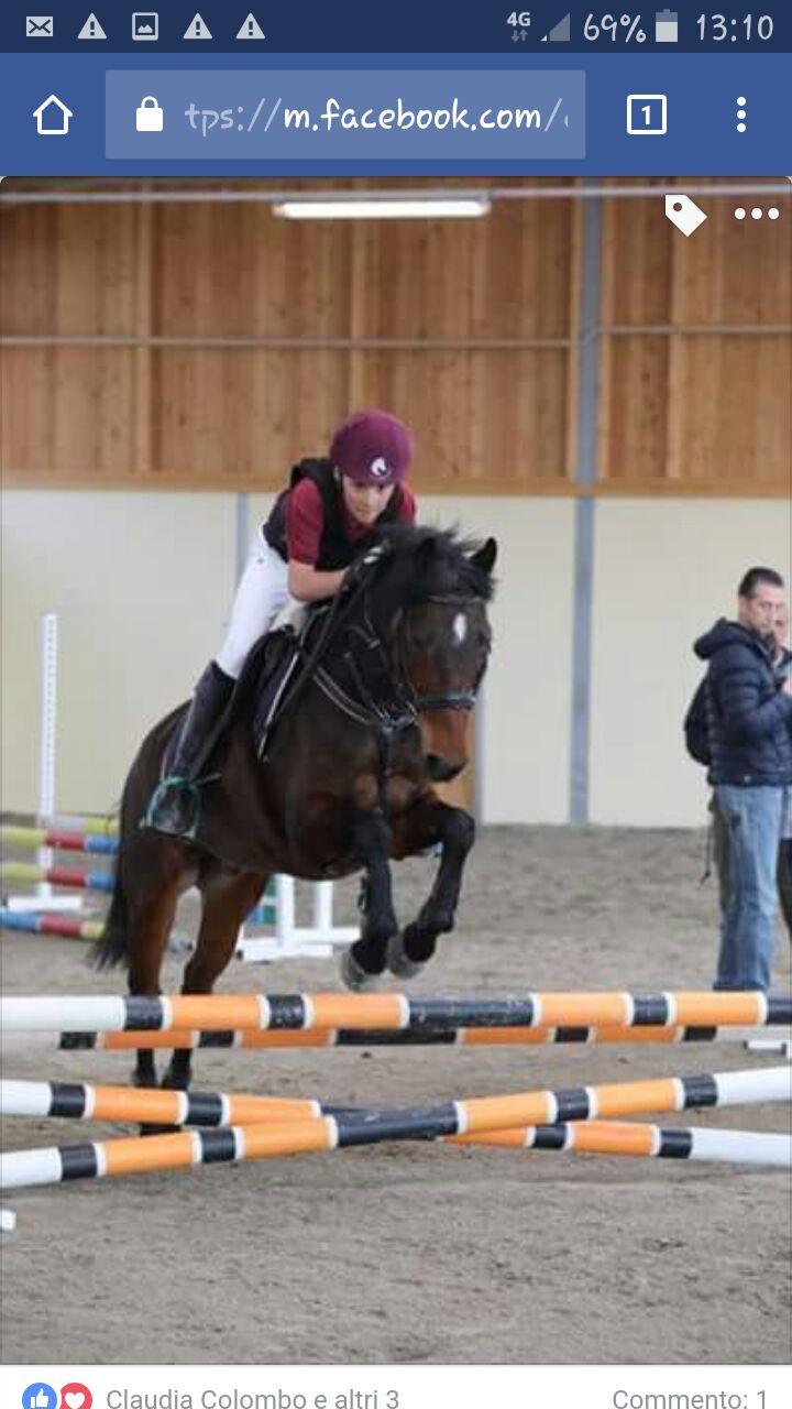 2^ Tappa Trofeo Lombardia 2017 – Gimkana Pony e Agility Pony Cavalli