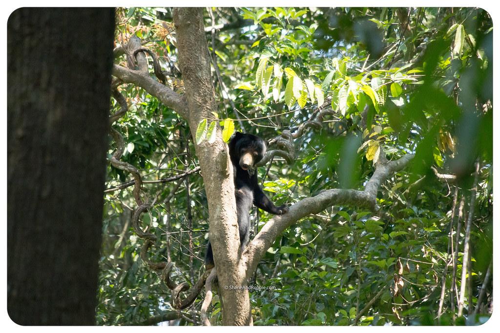 Borneo-20170413-IMG_8153