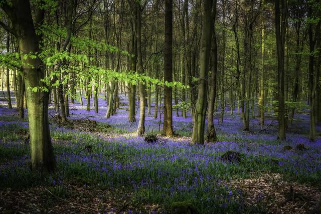 King's Wood Ashford