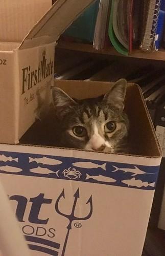 Watson in a box