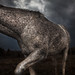 Nashalina Schrape_Hoof Thrower-3753 by nashalina schrape