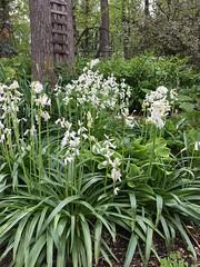 Yard gardens April 2017