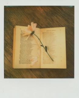 Challenge #6 The Language of Flowers
