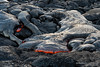 Surface lava flow, Kilauea [6978] by josefrancisco.salgado