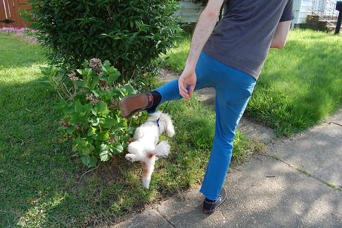 Walking the Dog (10)(May 10 2013)