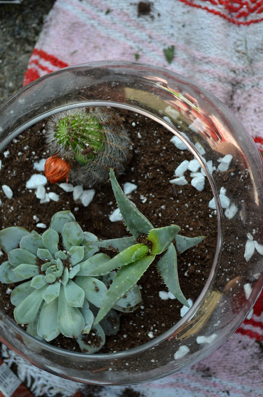 DIY Glass Terrarium 11