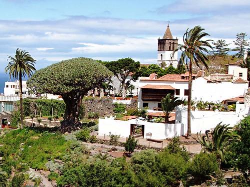 Drago Tree, Icod de los Vinos, Tenerife