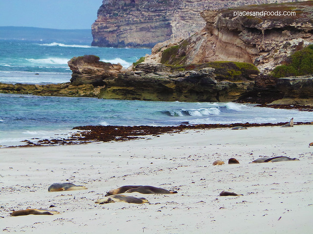 kangaroo island sleeping seals scenery