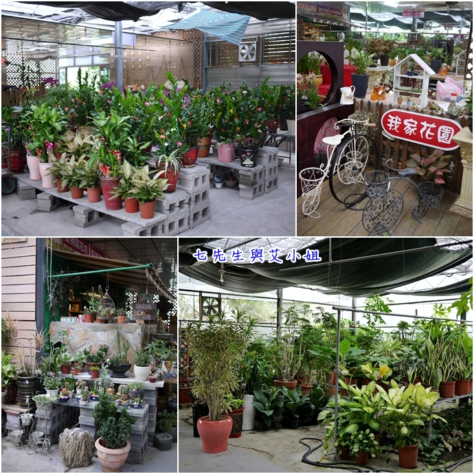 4 金羽庭花卉農場
