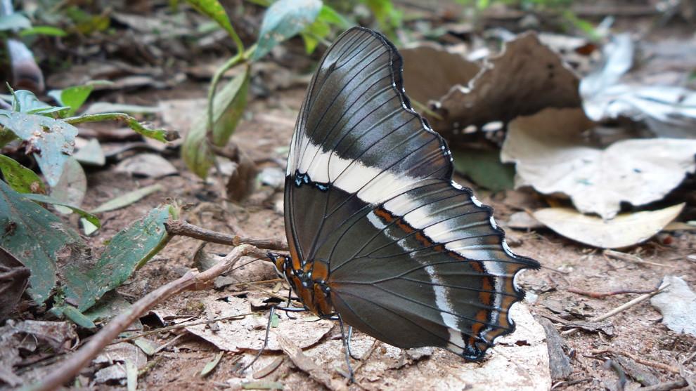 Una mariposa se posa en el suelo (Tetsu Espósito).