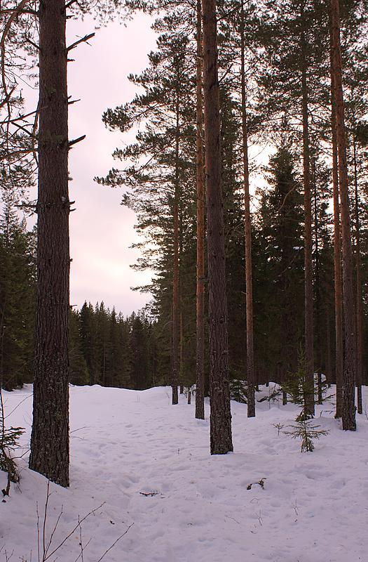Forest Trail, Jädra Ås, Sweden