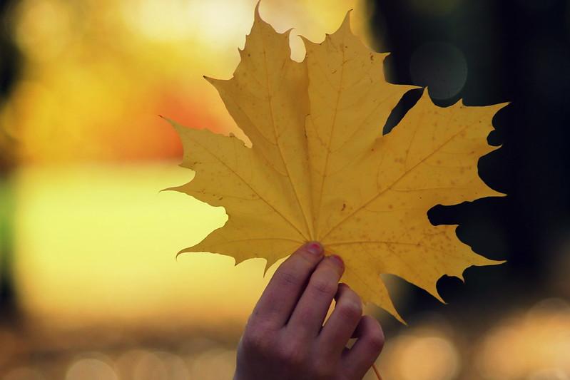 oh autumn 203