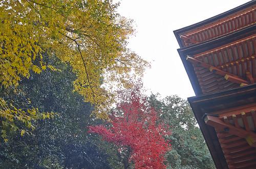 【写真】2013 紅葉 : 浄瑠璃寺/2019-08-22/IMGP3549