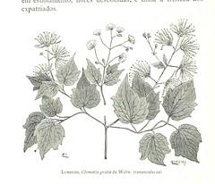 Image taken from page 480 of 'Expedição Portugueza ao Muata-Ianvo. Os climas e as Producções das terras de Malange á Lunda, etc. pt. I'