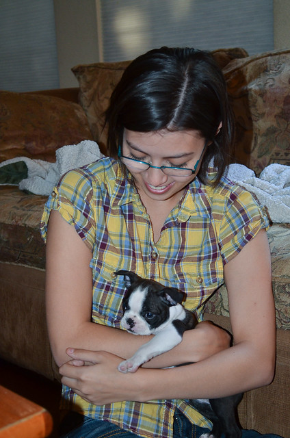 A woman holding a Boston Terrier puppy.