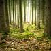 fairytale Forest II by Gruenewiese86