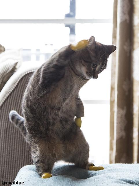 pixelle le chat