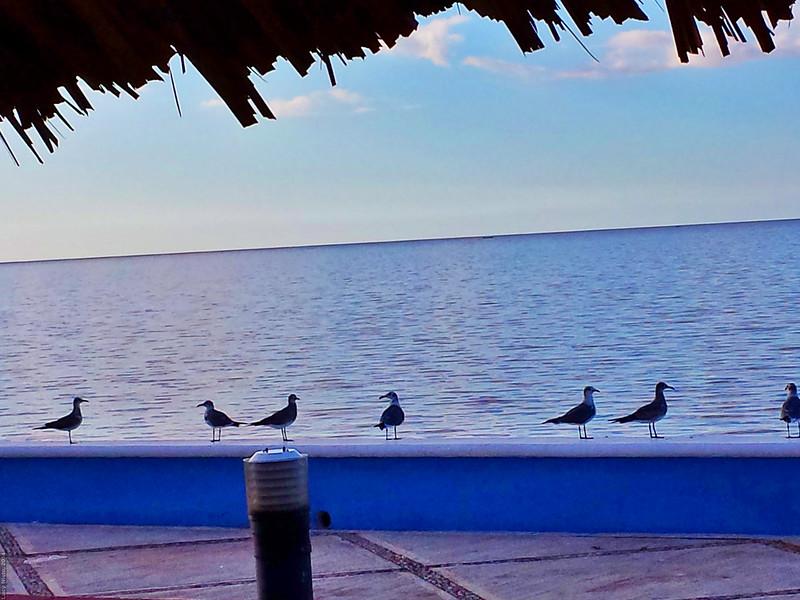 Campeche - México 140110 162517 1 S4 Snapseed